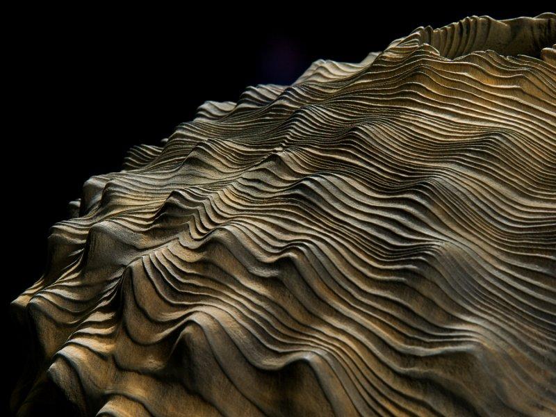 The Best of Wood Sculpture Art - Eleanor Lakelin - Ferrous Shift - Detail wood sculpture The Best of Wood Sculpture Art: Eleanor Lakelin The Best of Wood Sculpture Art Eleanor Lakelin Ferrous Shift Detail