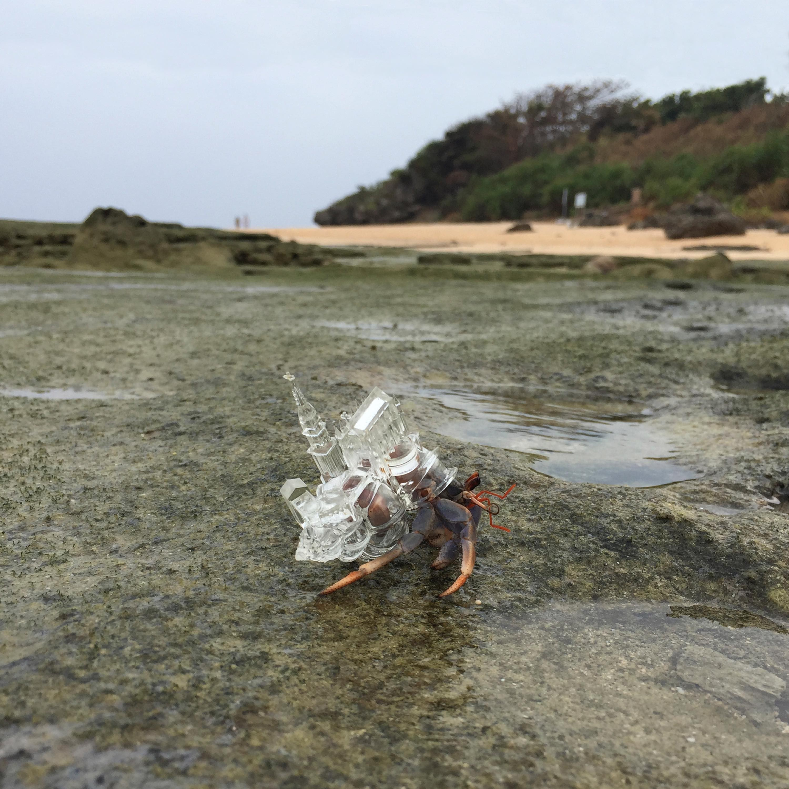 Are You Ready for Art Basel Hong Kong 2019? art basel hong kong 2019 Are You Ready for Art Basel Hong Kong 2019? Aki Inomata Why Not Hand Over a Shelter to Hermit Crabs White Chapel FILM