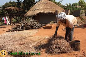 mabela Mabela, the Crafts and Arts Natural Straw Staw House  Mo  ambique Online